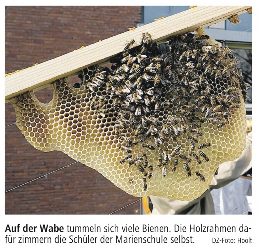 Honig Ernten Im Schulgarten Die Imker Ag Der Marienschule